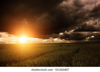 Corn field with stormy clouds over it in sunset and ray of sunshine