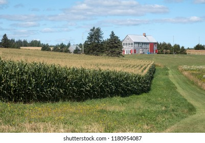 Corn Fields and Farm Near Sally's Beach Provincial Park in Prince Edward Island Canada
