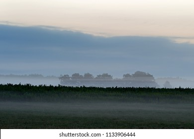 Corn fields in morning light at the Kremersdijkje in Alteveer, the Netherlands