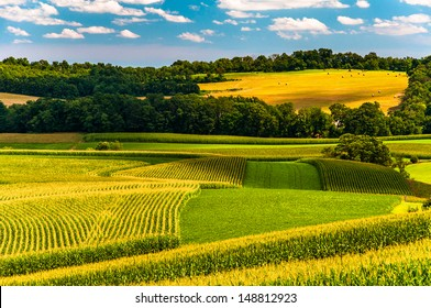 Corn fields and rolling hills in rural York County, Pennsylvania.