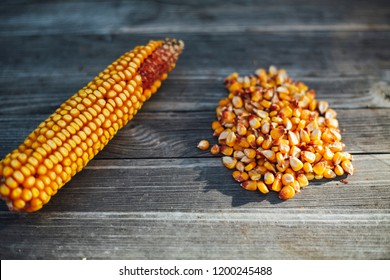 corn genetic engineering