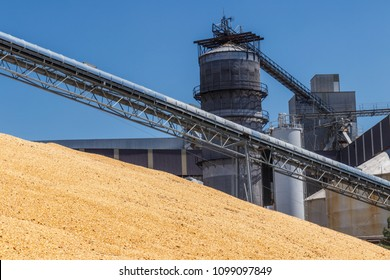 Corn and Grain Handling or Harvesting Terminal. Corn Can be Used for Food, Feed or Ethanol V