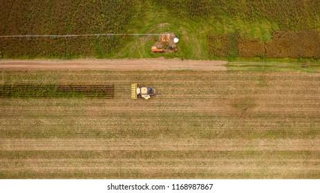 Corn harvest 2018 looking down on corn fields