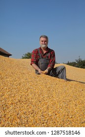 Corn harvest, farmer at heap of crop holding handful of seed and smiling