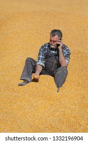 Corn harvest, farmer at heap of crop throwing seed from hand and speaking by mobile phone