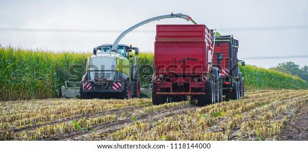 Corn harvest, corn forage harvester in action