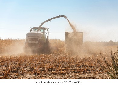 The corn is harvested
