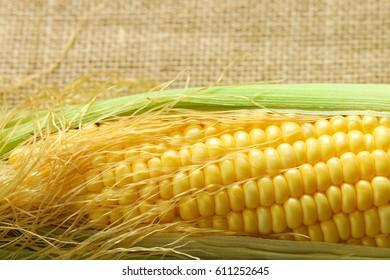 Corn isolate on sackcloth background