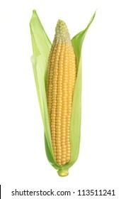 corn isolated on white