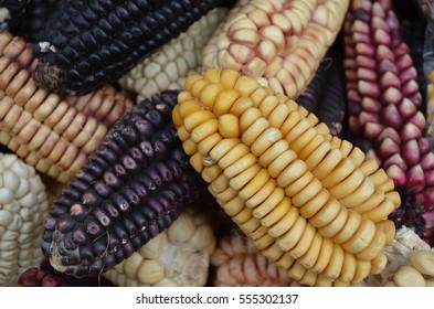 Corn / Maize varietals in Peru