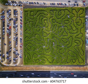 Corn Maze, Petaluma Pumpkin Patch, an aerial view of the maze, hedges and paths, Cars parked,