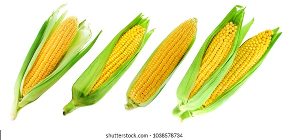 Corn on the cob kernels close up shot Clipping Path