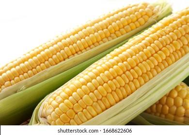 Corn on white background; studio shot