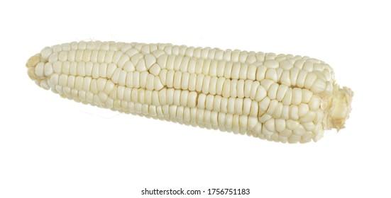 Corn photo on white background