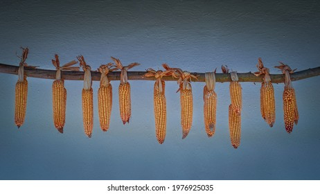 corn pipes hanging on old farmhouse wall