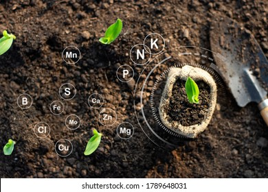 Corn seedlings grow from fertile ground and have technology icons about minerals in the soil suitable for crops. - Shutterstock ID 1789648031