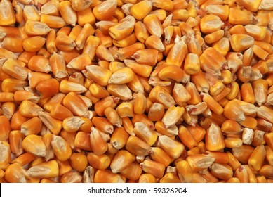 corn seeds close up as background