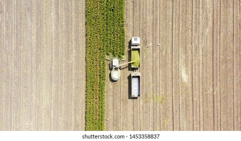 Corn for Silage - Combine harvesting and loading silage onto a double trailer truck, Aerial image.