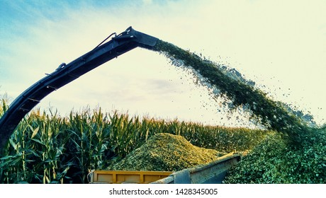 corn silage harvester. harvesting of juicy corn with silage machine