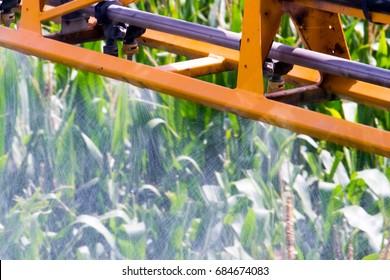 Corn Spraying,chemicals management