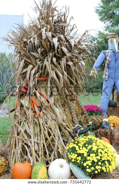 Corn Stalks Fall Decorations Outside Stock Photo Edit Now 735642772