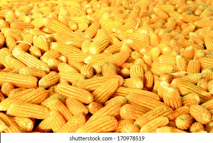 corn in storage