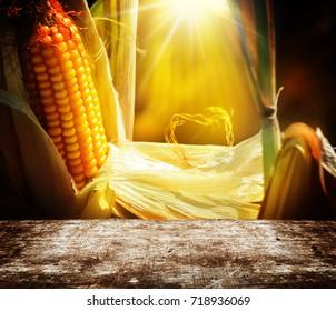 Corn in sunshine behind wooden board
