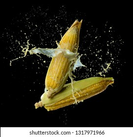 Corn with sweet corn juice (corn milk) splash or explode flying in the air isolated on black