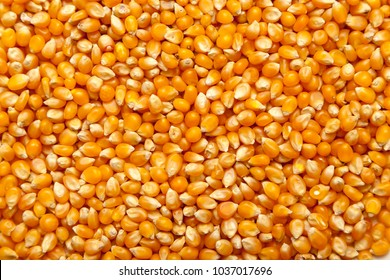 Corn texture as backgroudn