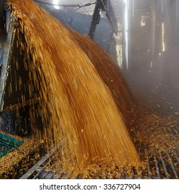 the corn unloaded in a heap after last harvesting