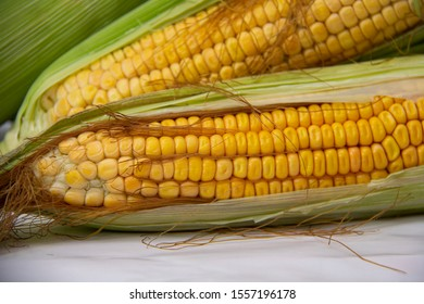 corn with white background close up