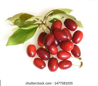 Cornelian cherry, cornus mas, is a shrub with red fruits that is also often wild. He is also one of the medicinal plants.