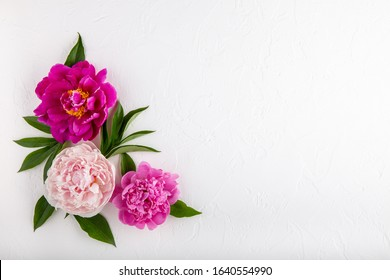 Corner arrangement composition of peony flowers on white background. Beautiful  garland of  pink peonies.  Close up, top view, copy space.