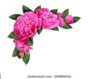 Corner arrangement with pink peony flowers, buds and leaves isolated on white background
