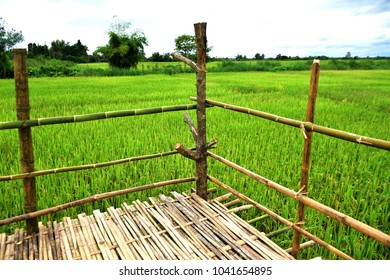 corner of bamboo terrace at paddy field.
