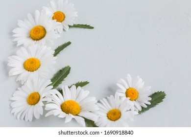 corner composition of large and white chamomile flowers on a white background with a copy of the space