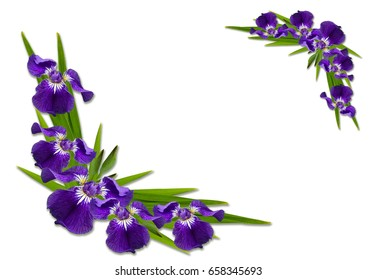 wild iris flower images stock photos vectors shutterstock rh shutterstock com