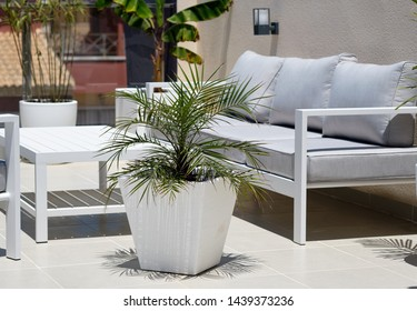 Corner of relaxation, modern furniture, empty grey couch wooden white washed table big potted plant outdoors inside of private cozy comfortable terrace, no people
