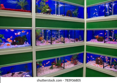 Corner rows of colourful tropical fish tanks