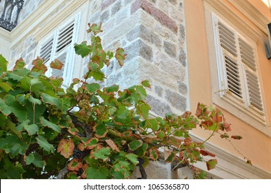 Corner of a traditional coastal house with vine