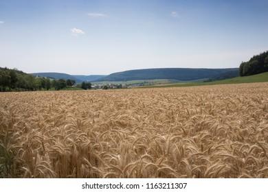 Cornfield in Germany