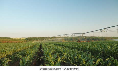 Cornfield irrigation using the center pivot sprinkler system. Panoramic shot of irrigated cornfield of a large scale commercial corn farm