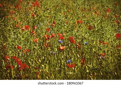 Cornfield with red poppies and blue cornflowers