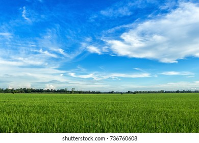 Cornfield and Rice Golden yellow in fluffy clouds Blue sky background in Thailand.