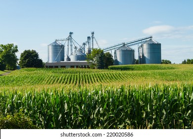 Cornfield with silos and farm in the distance