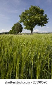 cornfield in spring (Germany)