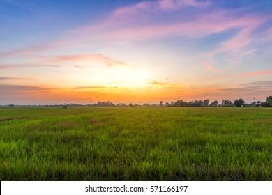 cornfield sunset background in Thailand.