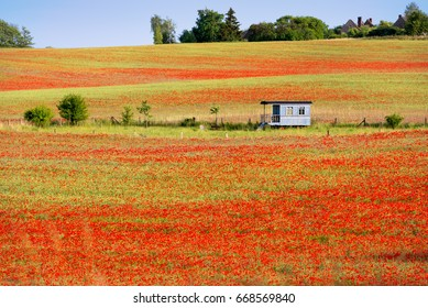 Cornfields with blooming poppies in early summer in the Uckermark, a landscape in northeast Germany