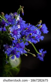 Cornflower flower. Bouquet of cornflowers in a vase on a black background. Blue flowers, summer field plants. Blue flower. Greeting card.