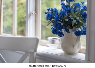 Cornflower in a pot in a summerhouse window under midsummer time